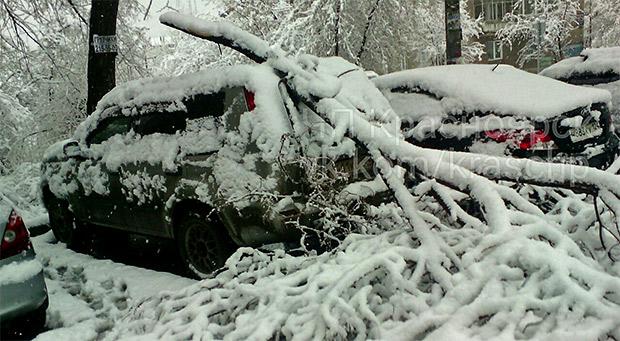 Деревья не выдержали нападавшего на них мокрого снега