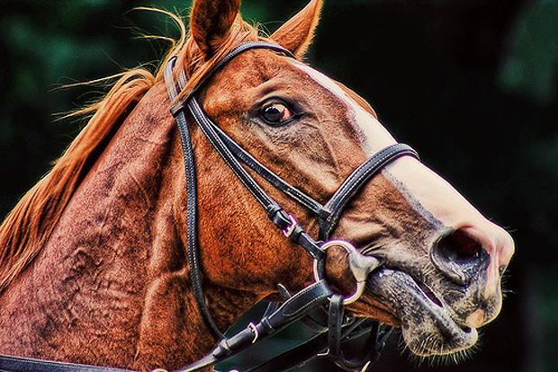 Frightened horse