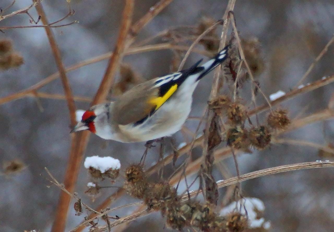 сергеевич птицы красноярска фото и названия остается день рожденья